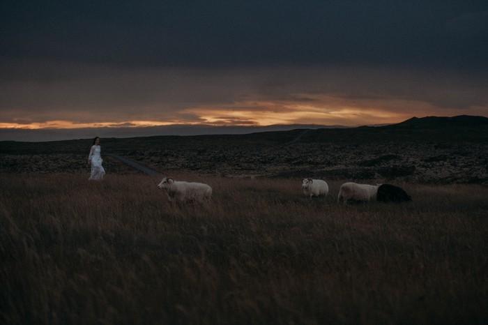 Iceland-sheep-horses